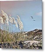 Coronado Island Pampas Grass Metal Print