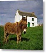 Cottage And Donkey, Tory Island Metal Print