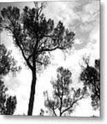 Cottonwood Silhouette Ser1 Metal Print