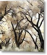 Cottonwood Trees Metal Print by Denice Breaux
