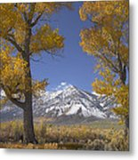 Cottonwood Trees Fall Foliage Carson Metal Print by Tim Fitzharris