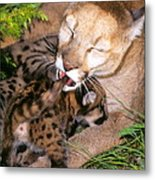 Cougar Mom Cleans Youngster Metal Print