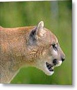 Cougar Profile Metal Print