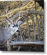 Country Buck Metal Print