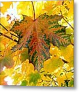 Country Color 21 Metal Print