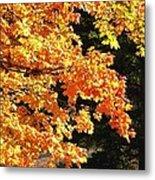Country Color 26 Metal Print