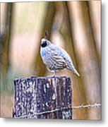 Country Quail Metal Print