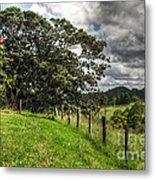 Countryside With Old Fig Tree Metal Print