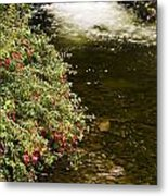 County Kerry, Ireland Fuchsia Bush Metal Print