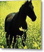 County Tipperary, Ireland Horse In A Metal Print