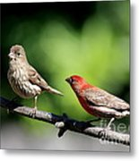 Courtship In Nature . 40d8073 Metal Print by Wingsdomain Art and Photography