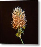 Cover Aglow 1 Metal Print