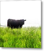 Cow Country Metal Print