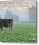 Cow On The Foggy Field Metal Print