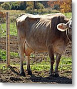 Cow Shadows Metal Print