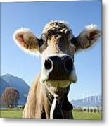 Cow With A Bell Metal Print