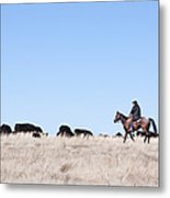 Cowboy And Cattle Metal Print