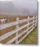 Cows And Fog Metal Print