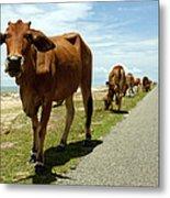 Cows At The Sea Metal Print