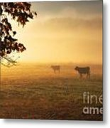 Cows In A Foggy Field Metal Print
