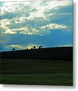 Cows On The Hill Metal Print