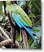Coy Parrot Metal Print