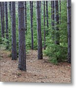 Cozy Conifer Forest Metal Print