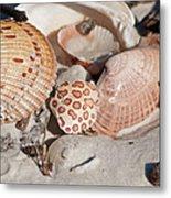 Crab Shell Metal Print