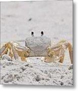 Crabby Eyes Metal Print
