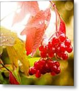 Cranberry Bliss Metal Print