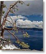 Crater Lake Pine Metal Print