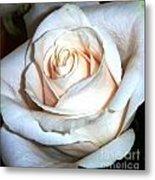 Creamy Rose IIi Metal Print