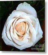 Creamy Rose Iv Metal Print