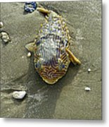 Creatures Of The Gulf - Still Blue Eyes Metal Print