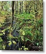 Creek In The Rain Forest Metal Print