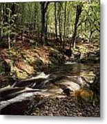 Creek In Woods, Cloughleagh, County Metal Print
