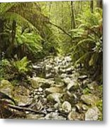 Creek Running Through The Rainforest Metal Print