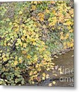 Creekside Gold 2012 Metal Print