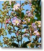 Crepe Mertle In Bloom Metal Print