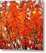 Crepe Myrtle Leaves In Autumn Metal Print