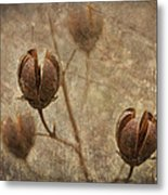 Crepe Myrtle Seed Pods With Grunge And Textures Metal Print