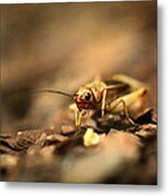 Cricket  Metal Print