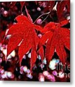 Crimson Beauty Metal Print