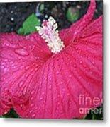 Crimson  Hibiscus Metal Print
