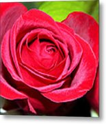 Crimson Red Rose Metal Print by Karon Melillo DeVega