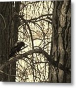 Crow In Thought Metal Print