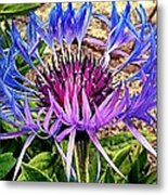 Crowned Beauty Metal Print by Kevin D Davis