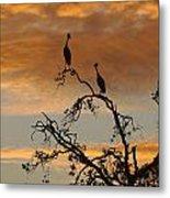 Crowned Cranes At Sunrise Metal Print