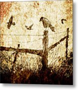 Crows And The Corner Fence Metal Print