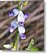 Crucian Wild Orchid Metal Print by David Alexander